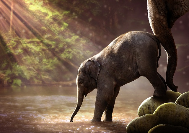 mladý slon