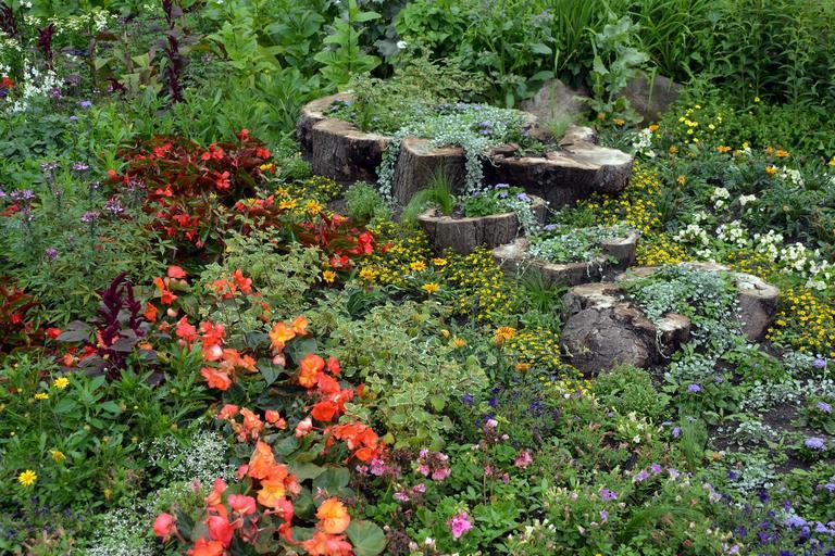 Zahradní rostliny